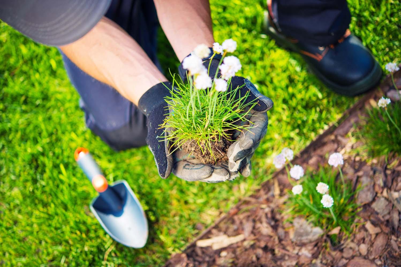 Christchurch Gardener